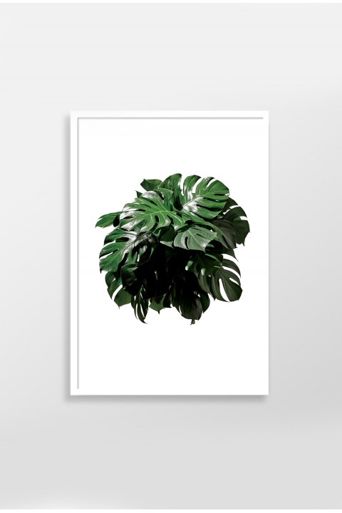 Action Zebra Monstera 30x40 cm Poster